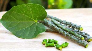 Giloy: 10 Amazing Health Benefits & Side Effects